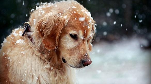Черкаські синоптики розповіли, якою буде погода в січні