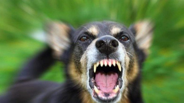 Черкащанку покусала власна собака