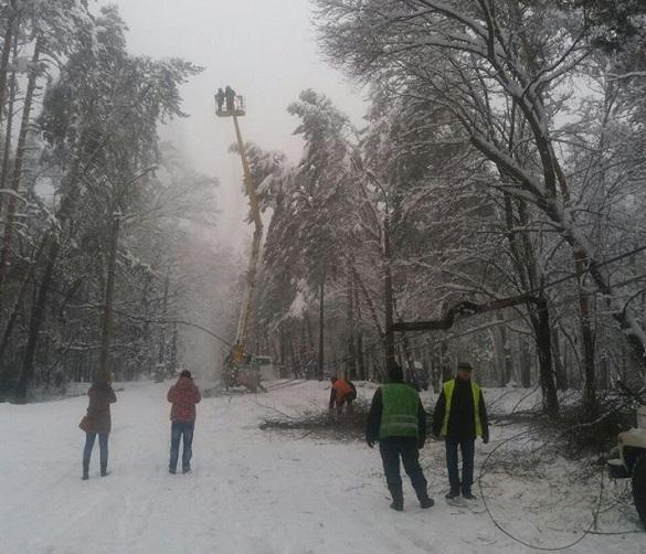Попадали на дорогу дерева: у Черкасах негода наробила лиха (ФОТО)