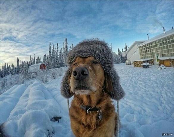 Арктичний холод прямує на Черкащину