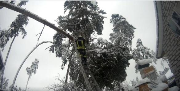 На житловий будинок у Черкасах впало дерево (ВІДЕО)