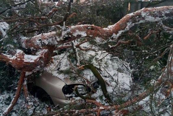 У Черкасах на машину впало дерево (фотофакт)