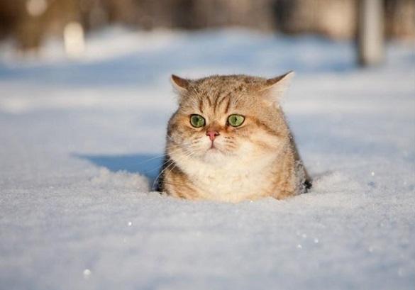 Черкаські синоптики розповіли про погоду на завтра