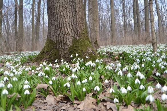 На Черкащині створили чотири нові ботанічні заказники