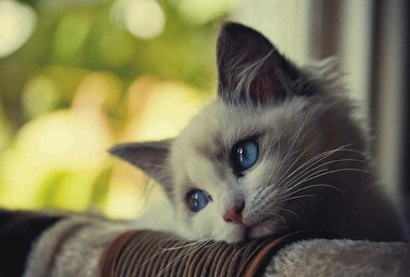 Як у Черкасах рятують котів?