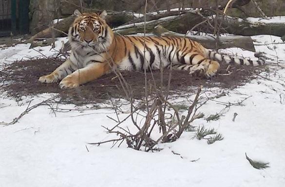 Як зимують мешканці черкаського зоопарку? (ФОТО)