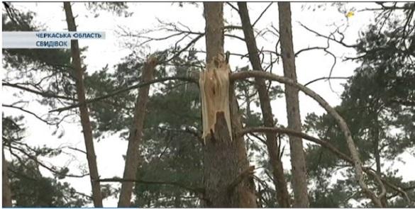Через приголомшливі збитки внаслідок хуртовин черкаські лісівники б'ють на сполох (ВІДЕО)
