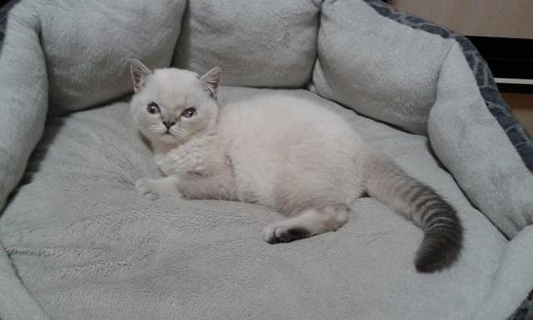 Незвичайному кошеняті шукають люблячих господарів у Черкасах (ФОТО)