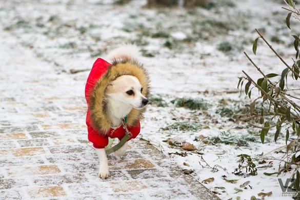 Морозна та без опадів: якою буде погода на Черкащині?