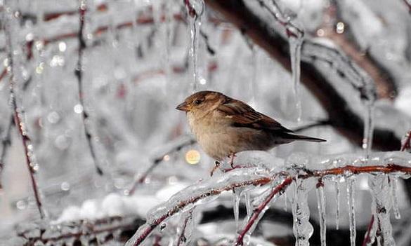 Зима затягується: на Черкащині прогнозують хуртовини та морози