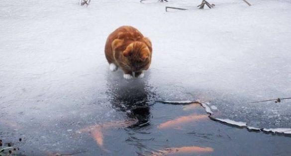 Мокрий сніг з дощем: синоптики розповіли про погоду на Черкащині