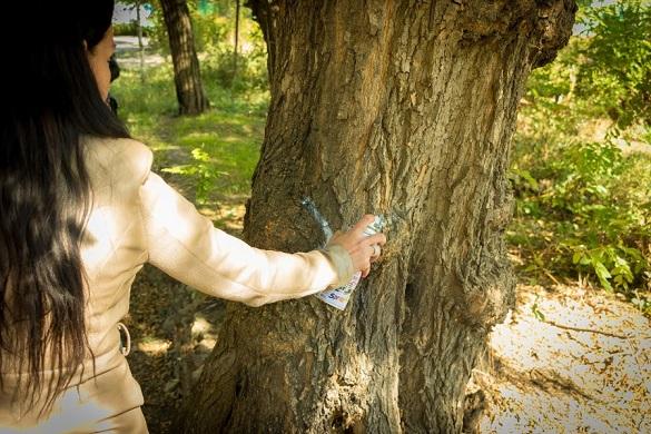 Відтепер дерева в Черкасах, які плануватимуть зрізати, позначатимуть фарбою