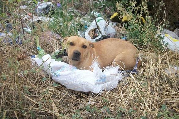 Коли за вікном -20: жителі Черкащини викинули собаку у мішку  (ФОТО)
