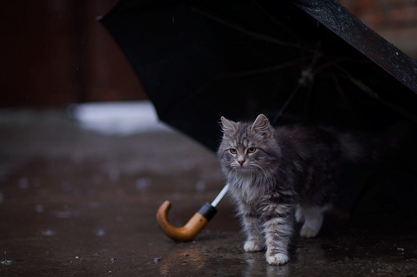 Сильний дощ та вітер: черкащанам розповіли про погоду до кінця тижня