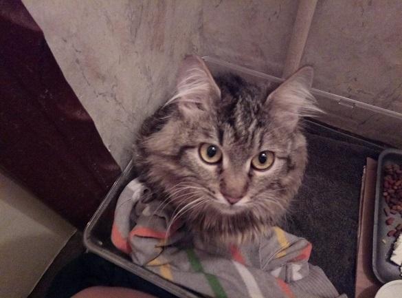 У Черкасах загублений кіт чекає на своїх господарів (ФОТО)