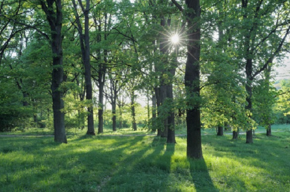 Черкащан запрошують дати назву новому парку