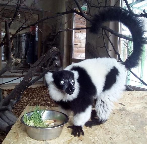 У черкаському зоопарку з'явився новий грайливий мешканець