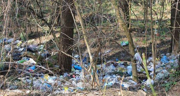 Черкаські ліси перетворюються на сміттєзвалища (ВІДЕО)