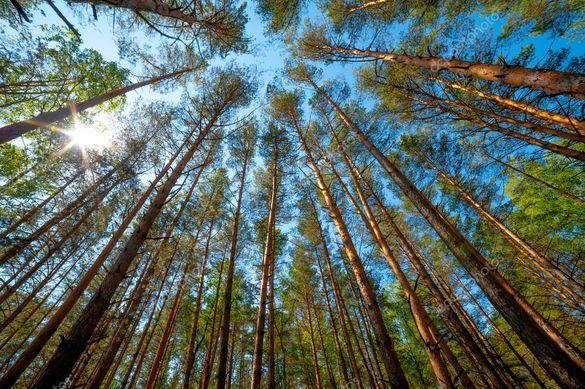 У черкаських лісах виріжуть майже сотню дерев (ВІДЕО)