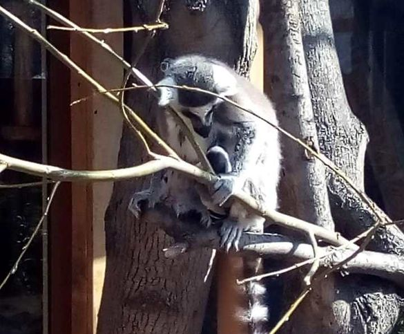 У черкаському зоопарку поповнення серед екзотичних тварин (ФОТО)