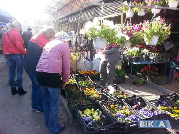 Які саджанці розкуповують черкащани для свого саду?