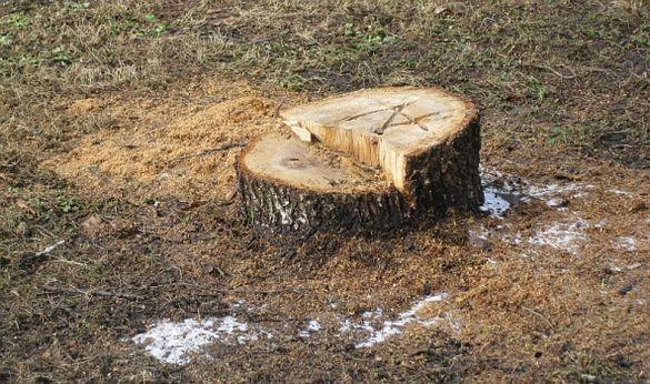 На Черкащині судитимуть чоловіка, який вирубав дерева на чималу суму