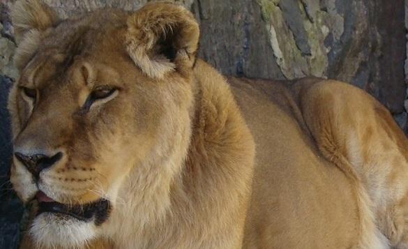 У черкаському зоопарку розповіли про тварин, які живуть у них найдовше