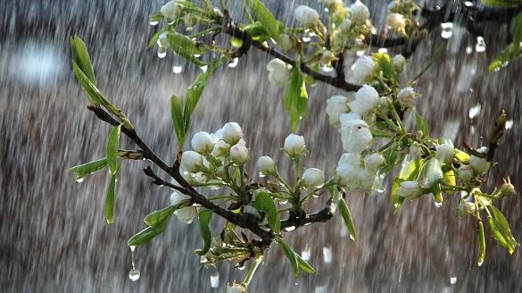 Черкащанам прогнозують короткочасні дощі та подекуди грози