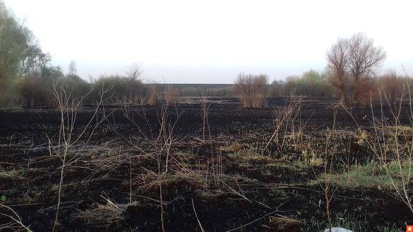 На Черкащині спалюють очерети разом із гніздами птахів (ФОТО)