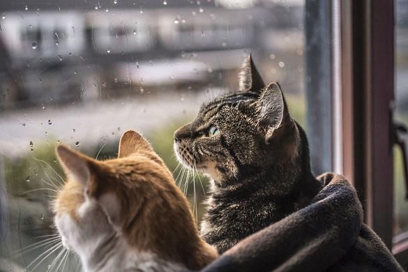 Черкаські синоптики розповіли про погоду в понеділок