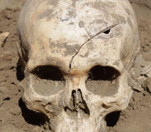 На Черкащині дослідили знайдені понад 300 черепів, кістки та щелепи (ФОТО)