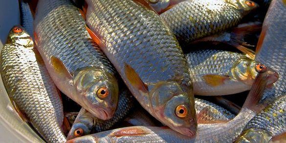 Стало відомо, на яку суму наловили браконьєри риби на Черкащині