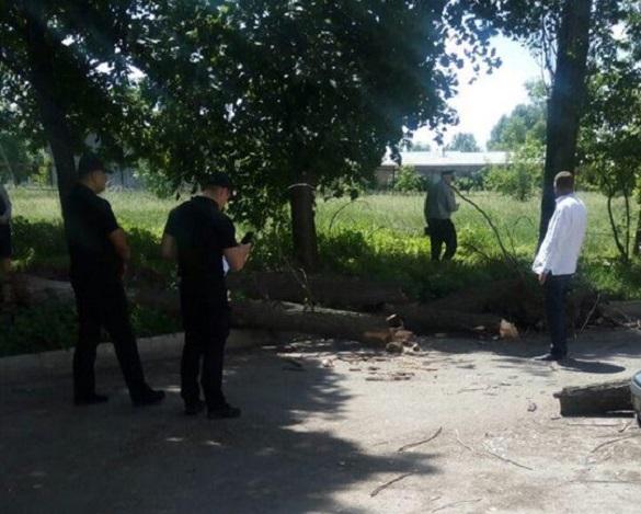 У Черкасах на дітей впало дерево