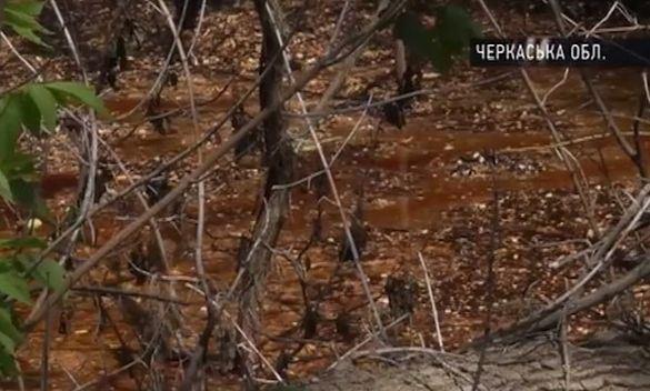 На Черкащині селяни спіймали водія, який зливав із цистерни їдкі хімікати (ВІДЕО)