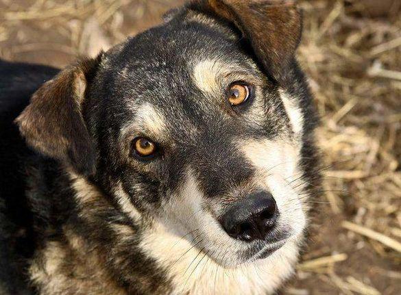 Тричі стріляв: на Черкащині чоловік влаштував розправу над собакою (ВІДЕО)