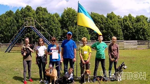 Перегони для чотирилапих: у Черкасах змагалися собаки