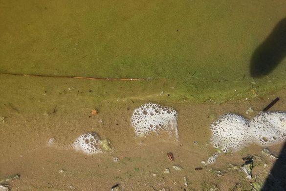Неочікувано: у Черкасах на Дніпрі почала цвісти вода (ФОТО)
