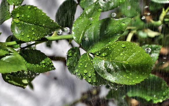 Черкащанам розповіли, чи очікувати дощу в регіоні