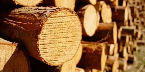 У Черкасах на аукціоні реалізовуватимуть лісоматеріали