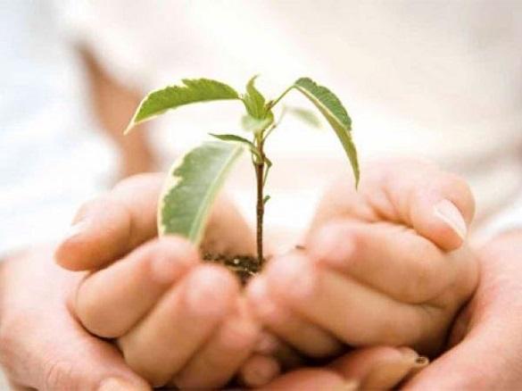 Припинити знищувати зелені насадження у Черкасах: міська рада розглянула петицію