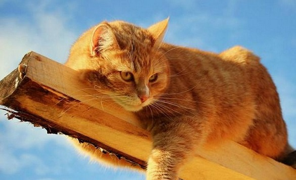 В Умані кіт-