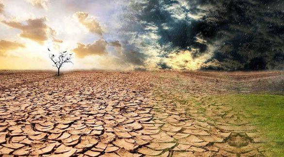 У деяких регіонах Черкащини посуха шкодить дозріванню урожаю