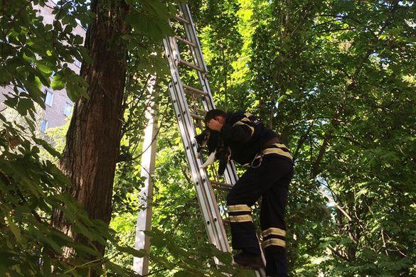 Черкаські рятувальники знімали з дерев кошенят (ФОТО)