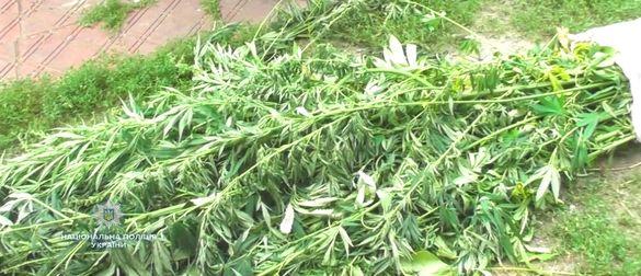 Поліцейські виявили майже дві тисячі рослин коноплі на Черкащині (ФОТО)