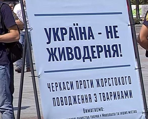 У Черкасах люди на мітинг привели своїх собак