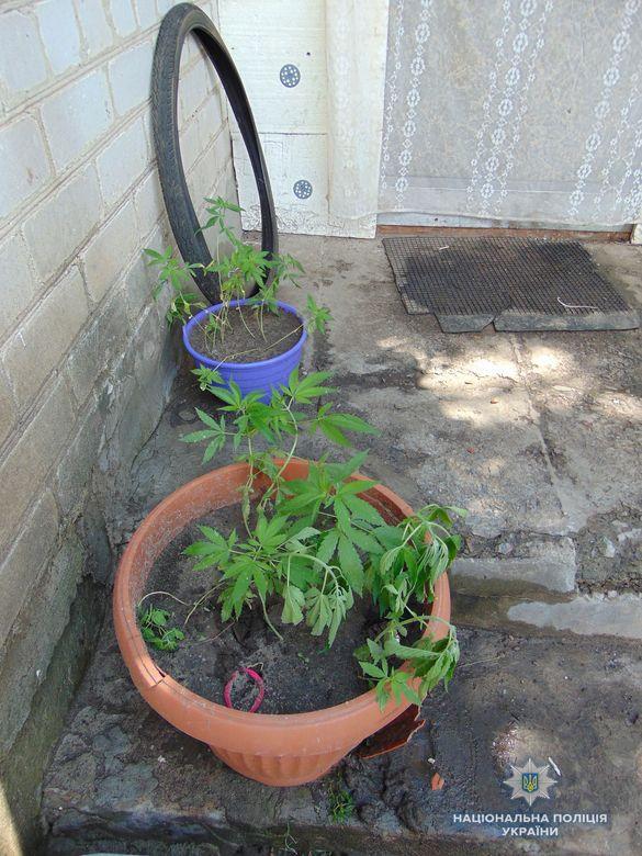 Черкащанин замість квітів вирощував у горщиках наркотики