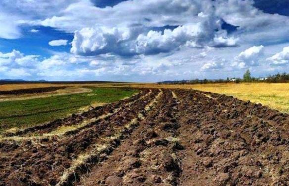 За безцінь для селян та безцінна для орендарів: яка ціна землі на Черкащині