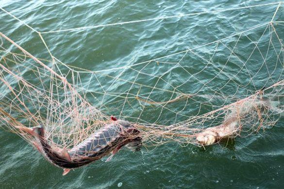 Золотоніський браконьєр упіймав риби на понад чотири тисячі гривень