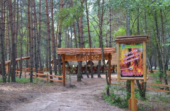 Черкаські лісівники відновили