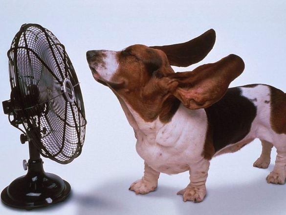 Температура підвищиться: черкащанам розповіли про погоду до кінця тижня